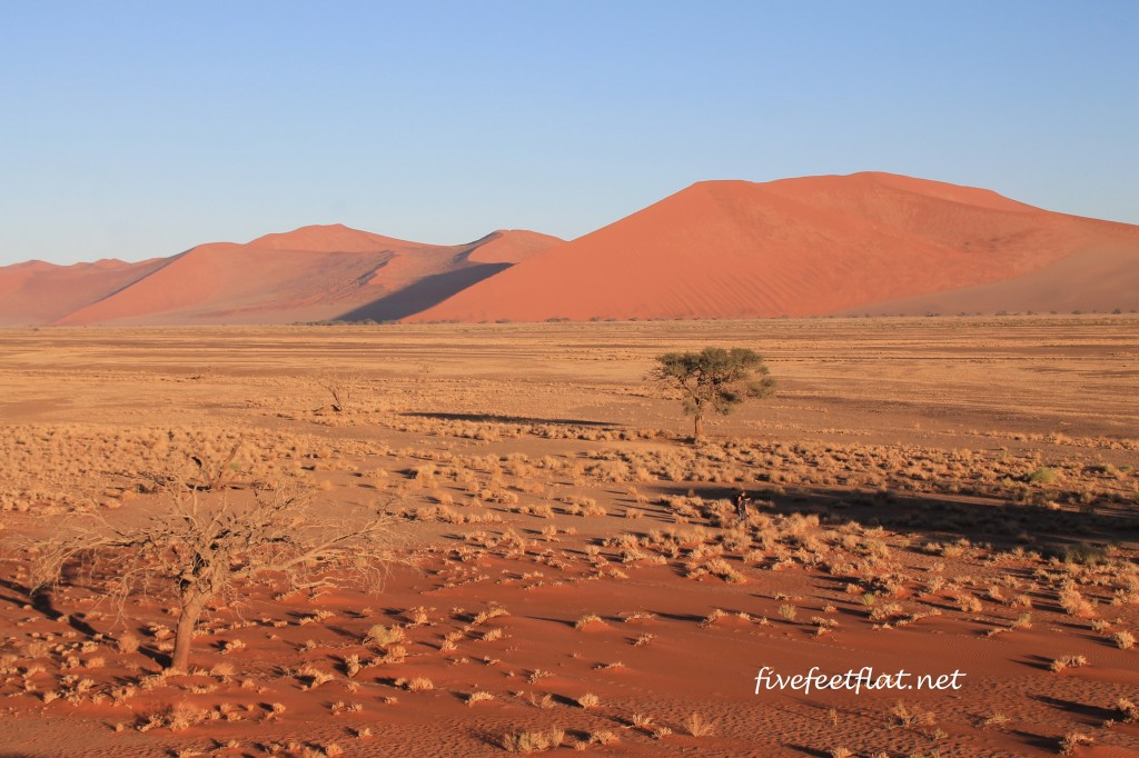 Dunes in the Namib Desert at sunrise