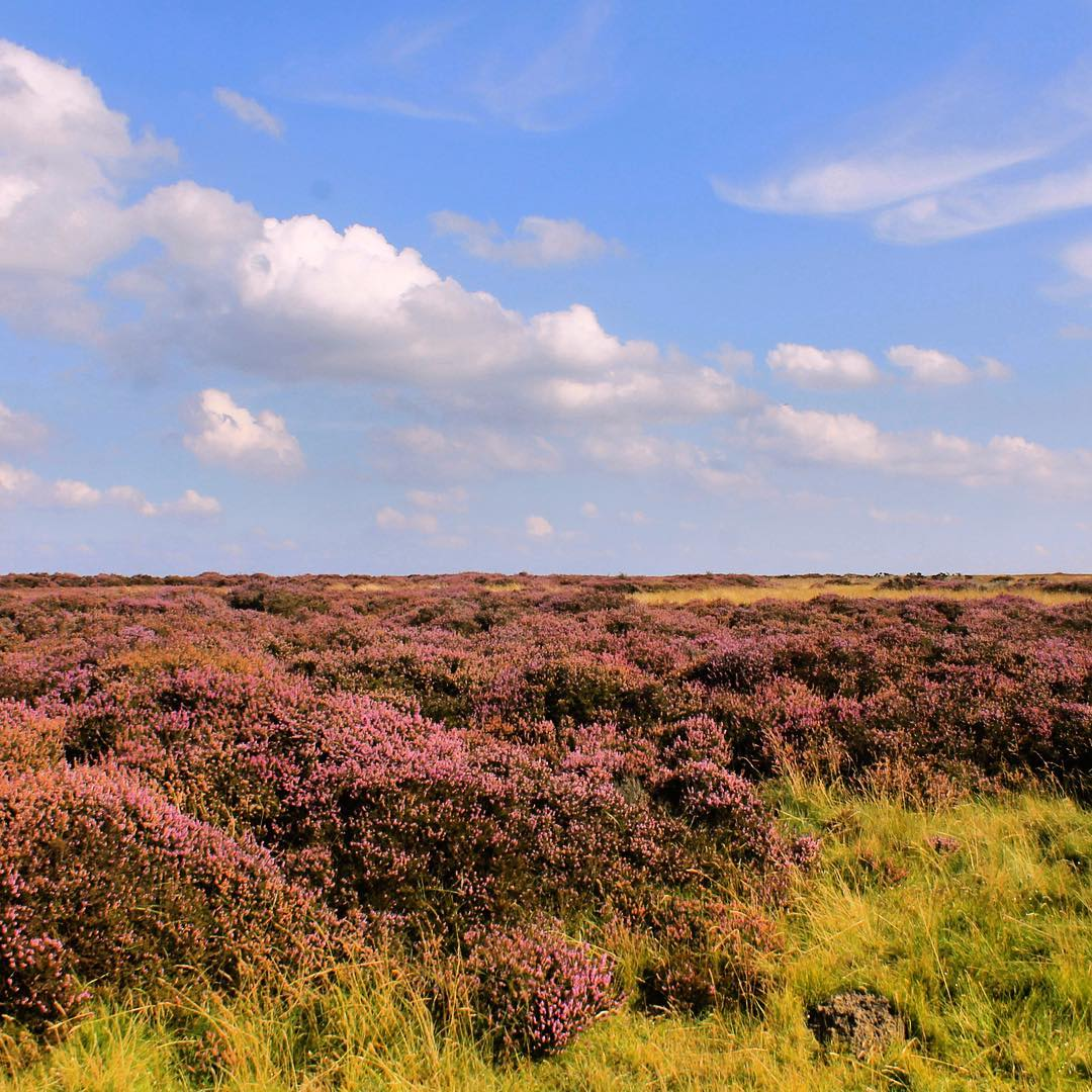 Another beautiful day on the North York Moors