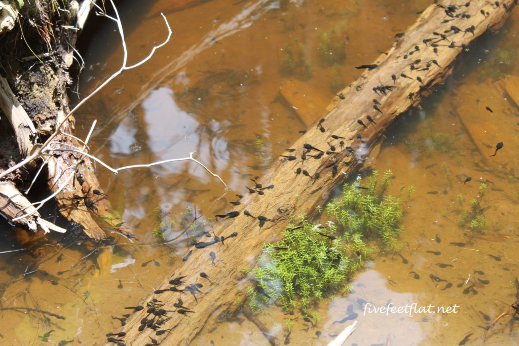 Quite the orchestra when these tadpoles grow up...