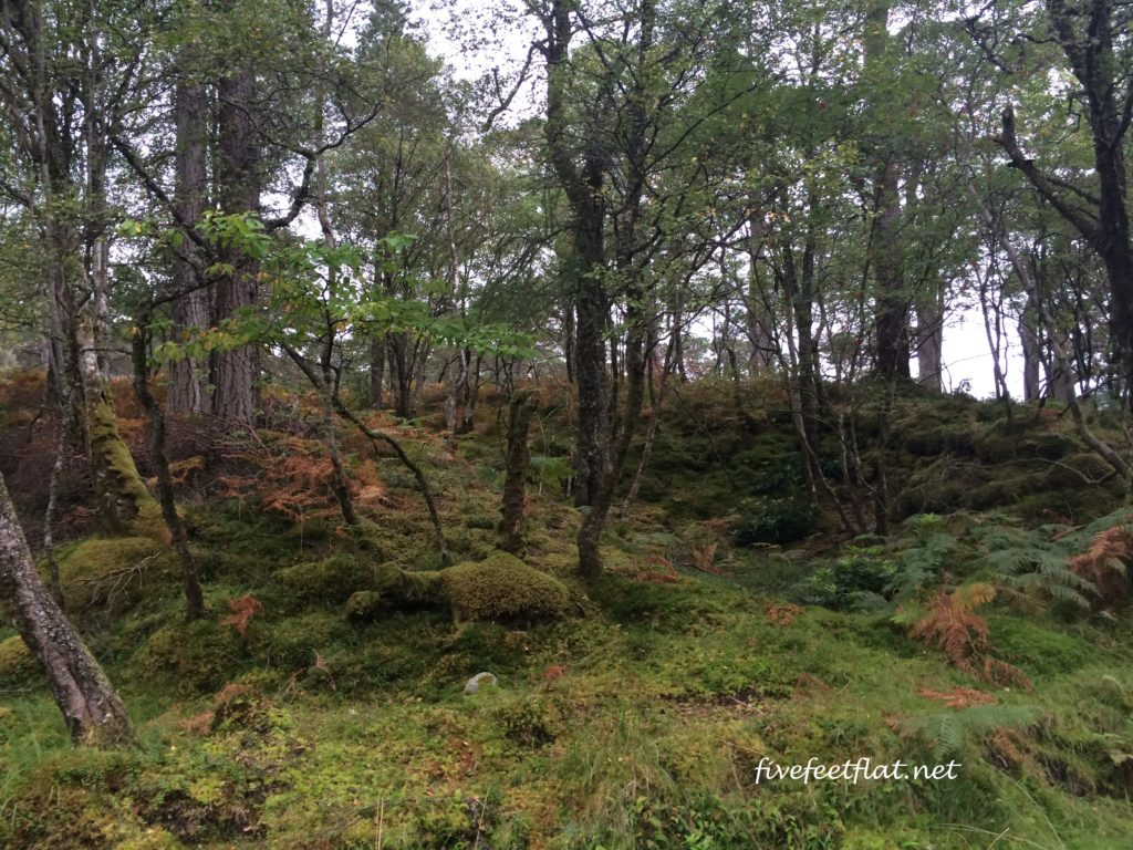 Gorgeous mossy forest on the way to Inveroran